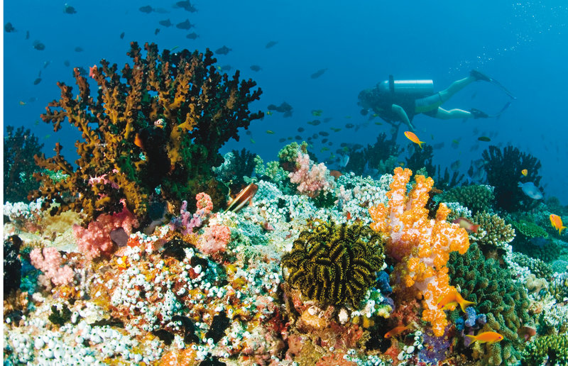 Diving on the house reef