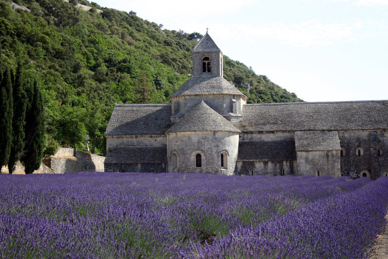 """The Provence """"Champs de Lavande"""""""