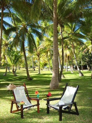 A magnificent coconut grove