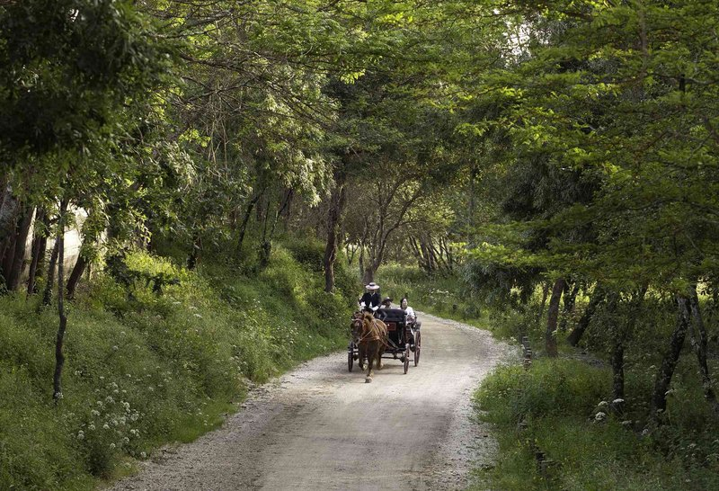 Carriage Tour at Natural pathway