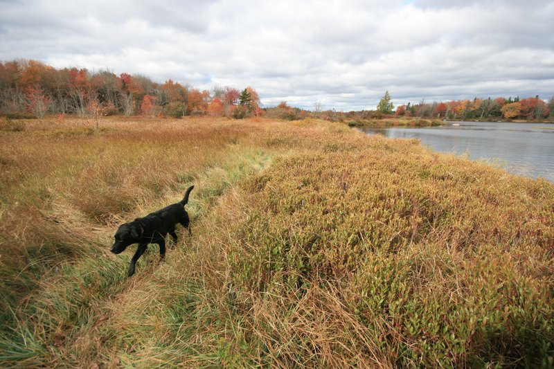 Cranberry marsh (on-site)