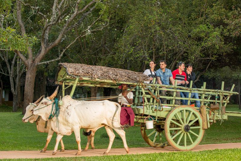 Cart rides around the resort or village