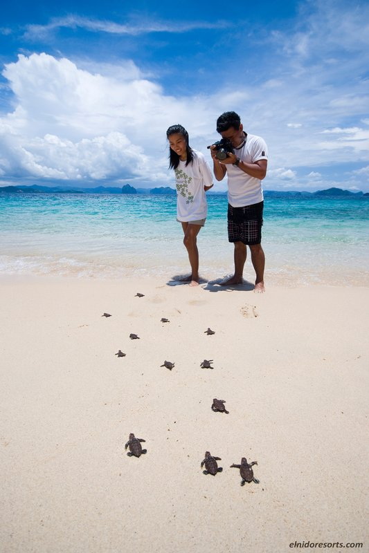 Turtle Tracking Tour During Turtle Season