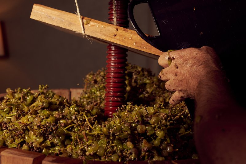 Harvesting at the Wine Atelier
