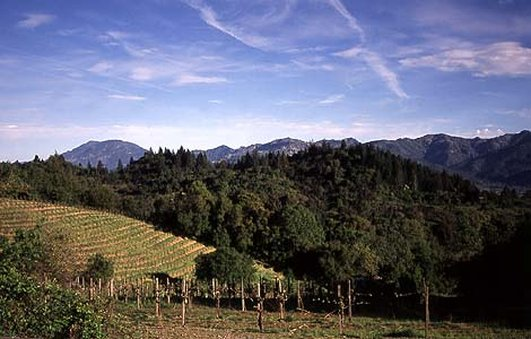 Napa Valley View