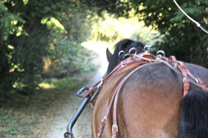Carmo's Carriage Tour at Ecovia