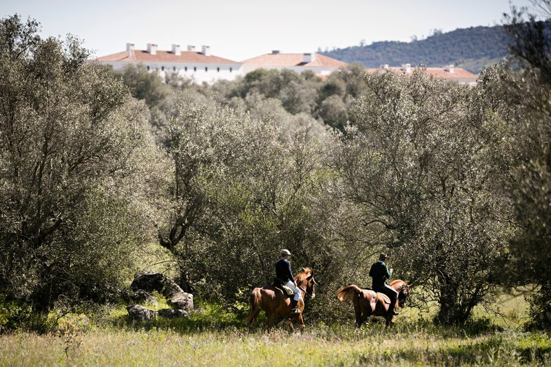 Horseback rides, great way to know the estate