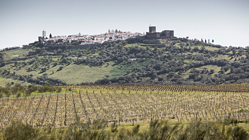 Vineyards in the estate with views to Monsaraz