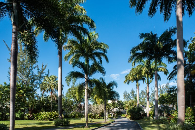 Palm Trees on Driveway