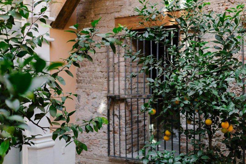 Orange Tree Terrace