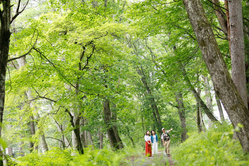 Walking tour with Guide in the Forest