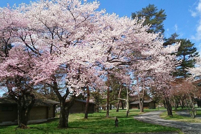 Spring in Karuizawa