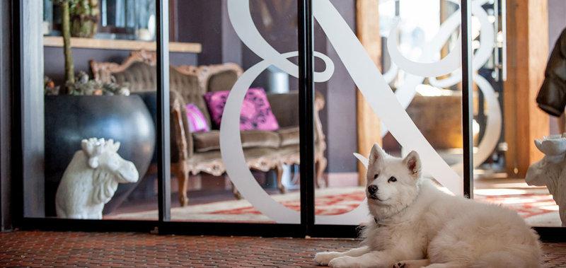 Art & Relax Dog