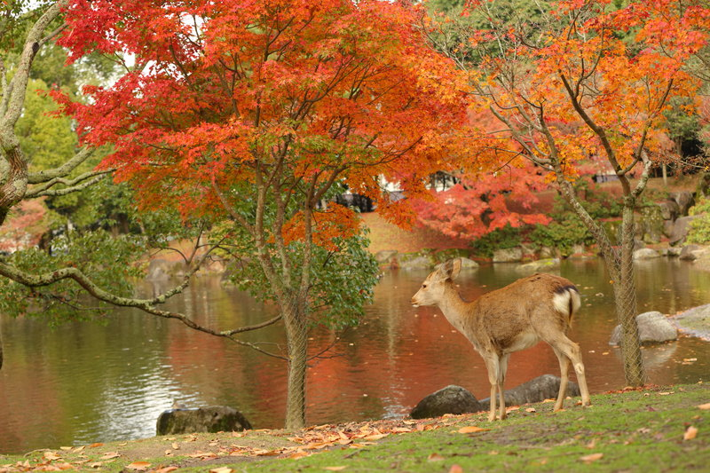 We are in the heart of Nara