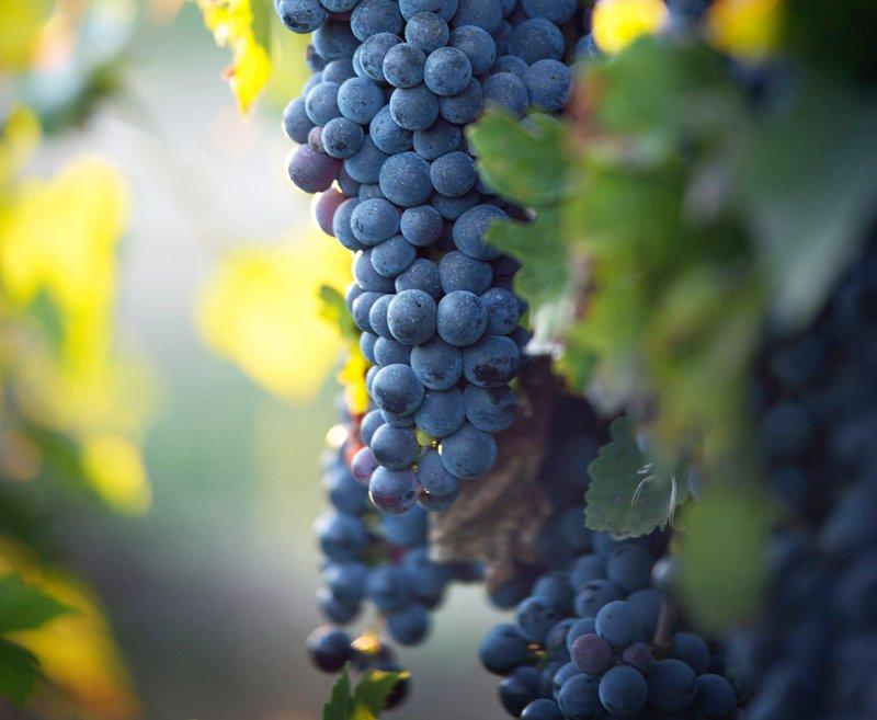 Home grown Grape