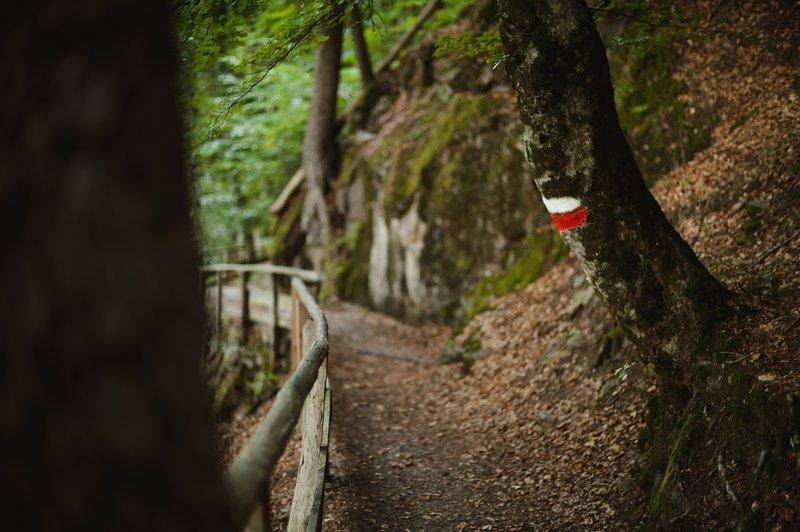 Miramonti_Forest