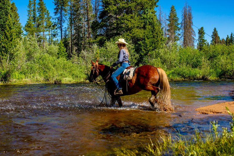Horse Crossing the Laramie River during Trail Ride