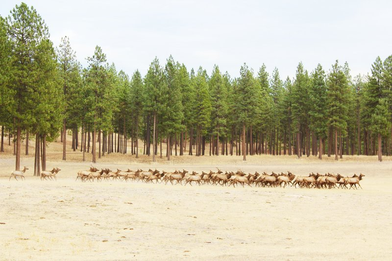 Experience Untouched Nature and Wild Elk
