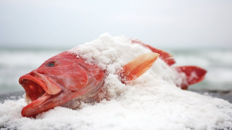 The Salty Snapper For Seafood Lovers