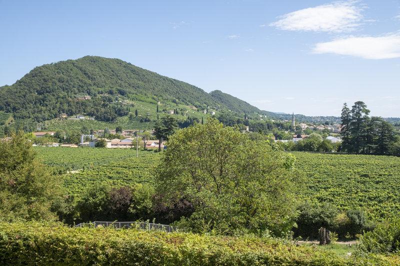 Prosecco Hills Landscape