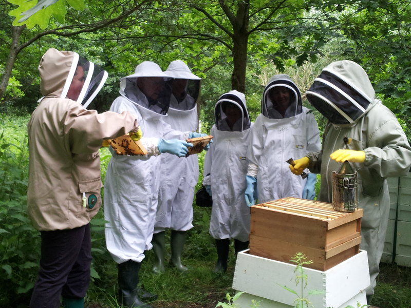 A Visit to the Bees