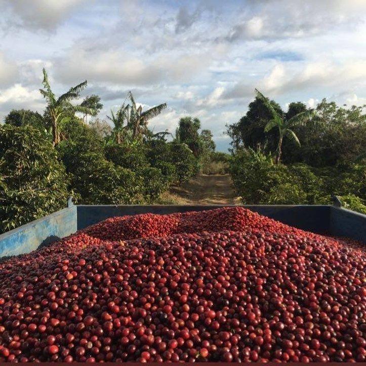 Farm coffee ready to brew