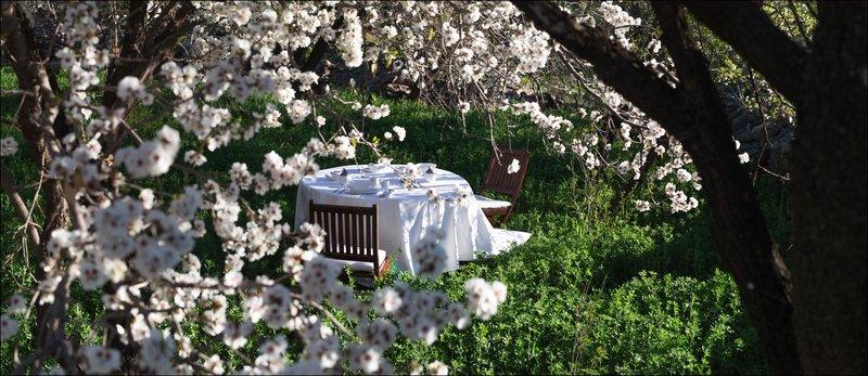 Almond Tree Experience