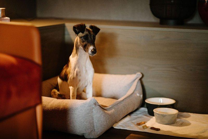Lauberhorn Suite Dog Friendly