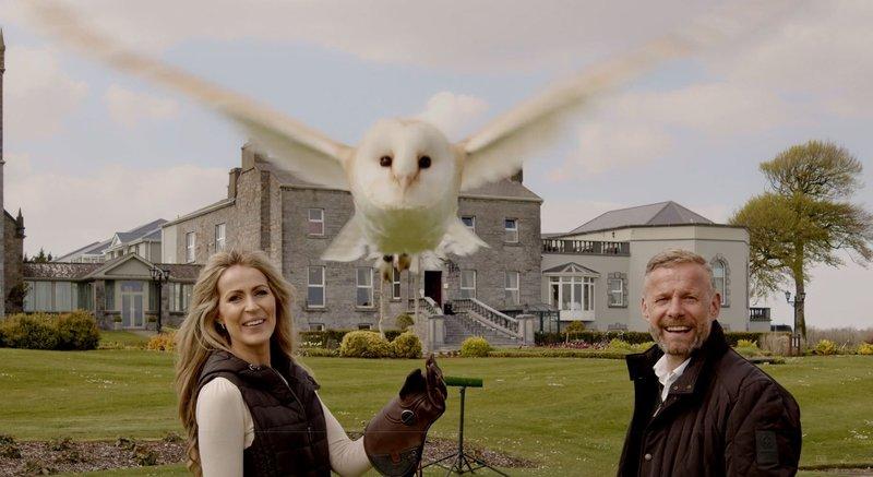 Falconry On Glenlo Abbeys Estate