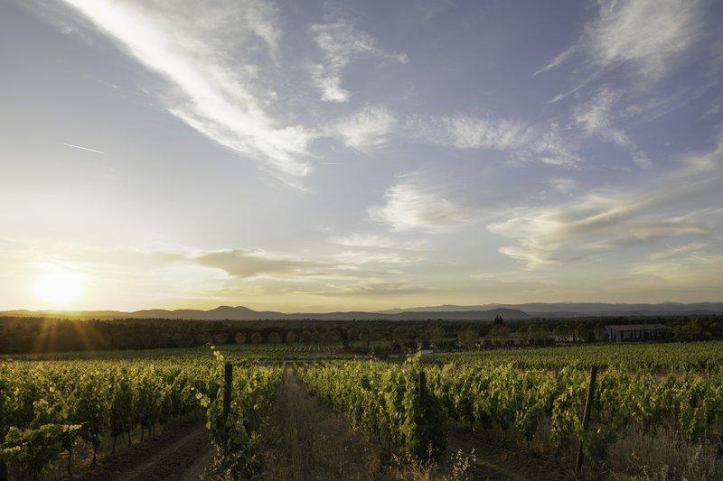 Nature Reserve Vineyard